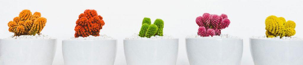 cactus buenas energías